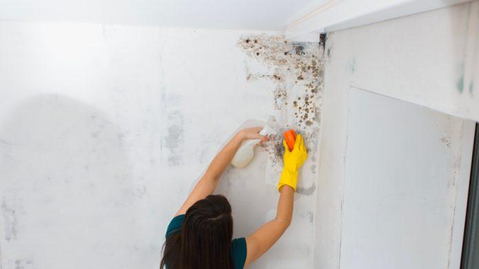 Comment détecter l'humidité dans les murs?