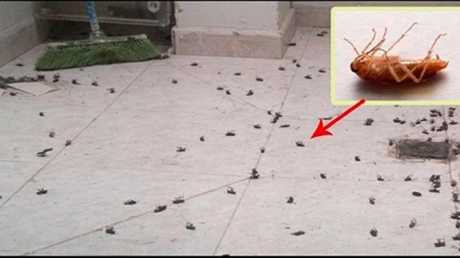 Comment se débarrasser des blattes