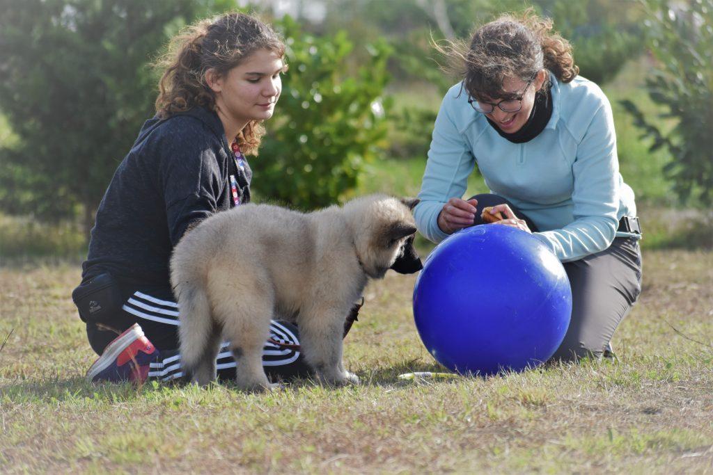 Assurez-vous que votre animal fasse régulièrement de l'exercice