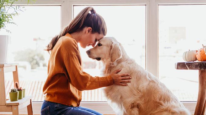 Découvrez les nécessités de base de bons soins pour animaux de compagnie