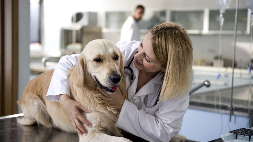 Les animaux domestiques nécessitent des visites chez le médecin et des habitudes saines