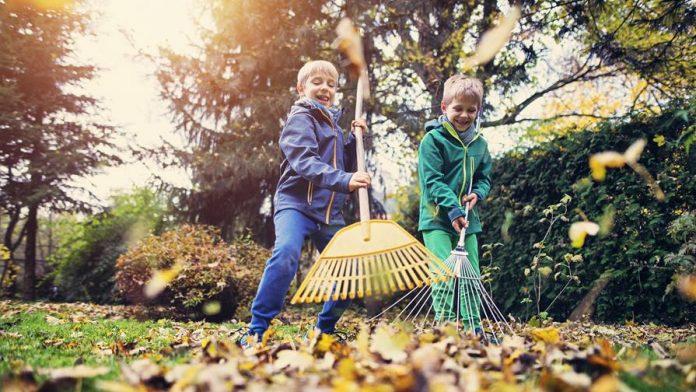 3 Meilleures conseils pour nettoyer votre cour