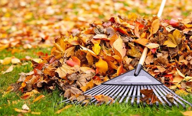 Commencez par nettoyer les feuilles mortes
