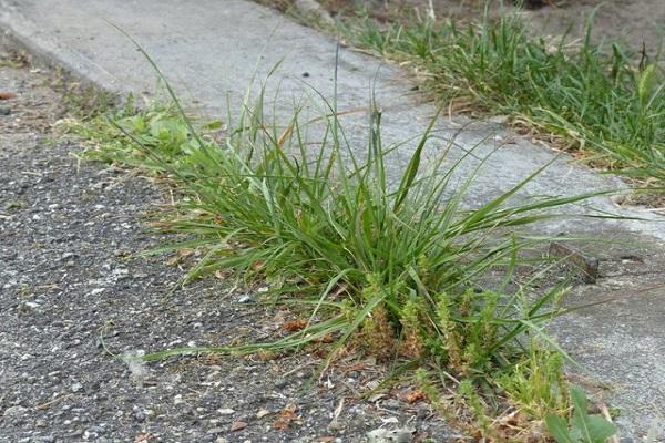 N'ignorez pas les mauvaises herbes