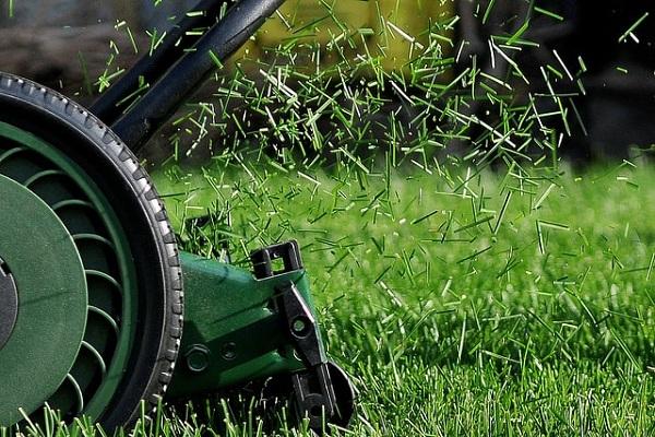 Tondre la pelouse régulièrement mais laisser pousser l'herbe