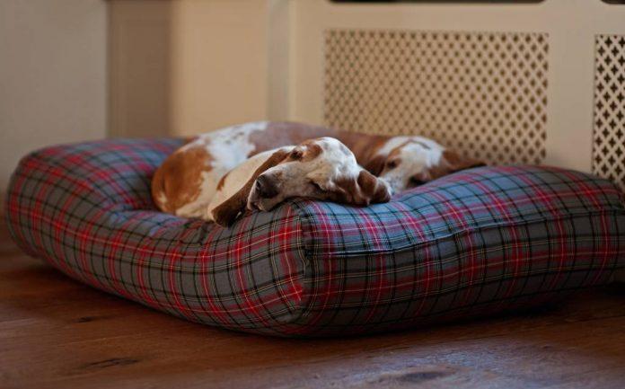 8 meilleurs lits pour chiens pour chaque chien